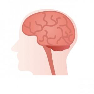 右脳、左脳の働き